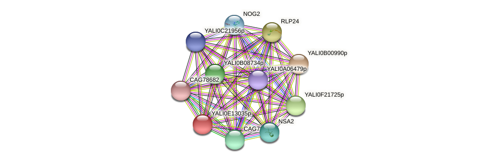 XP_503884.1 protein (Yarrowia lipolytica) - STRING interaction network