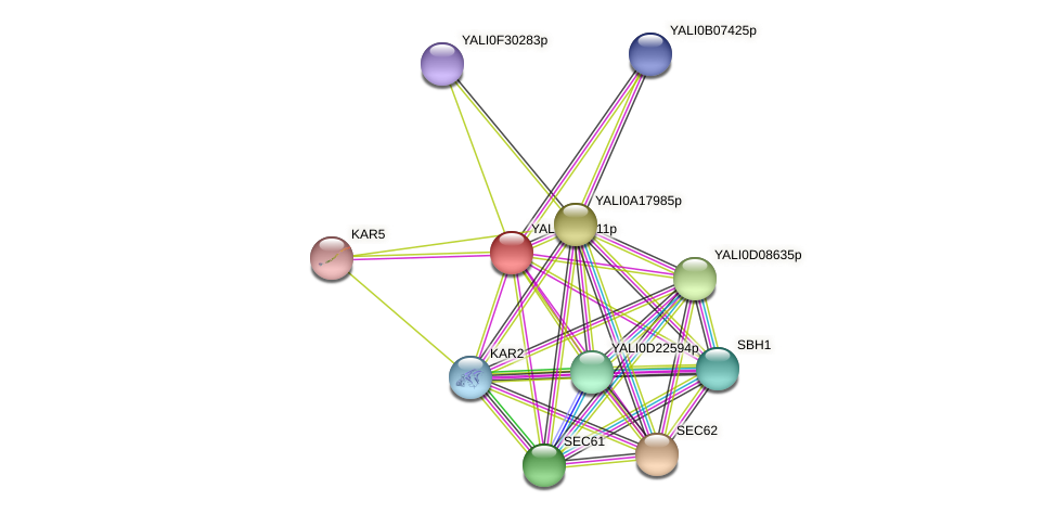 XP_503892.1 protein (Yarrowia lipolytica) - STRING interaction network