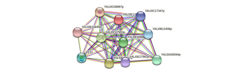 XP_503894.1 protein (Yarrowia lipolytica) - STRING interaction network