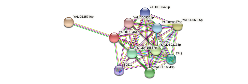XP_503902.1 protein (Yarrowia lipolytica) - STRING interaction network