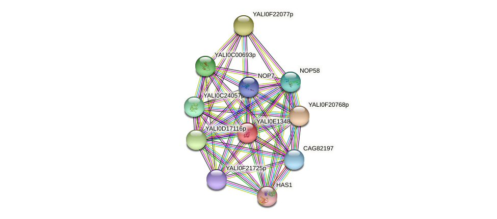 XP_503903.1 protein (Yarrowia lipolytica) - STRING interaction network