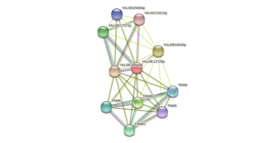 XP_503914.1 protein (Yarrowia lipolytica) - STRING interaction network