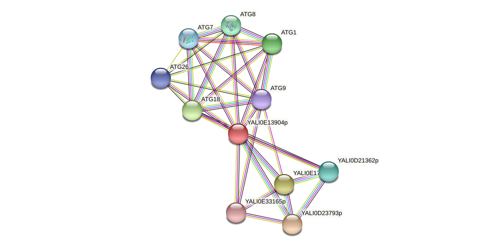 XP_503920.2 protein (Yarrowia lipolytica) - STRING interaction network