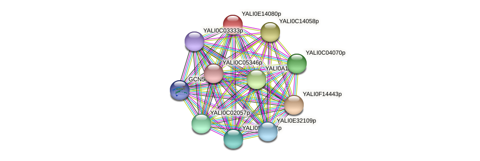XP_503928.1 protein (Yarrowia lipolytica) - STRING interaction network
