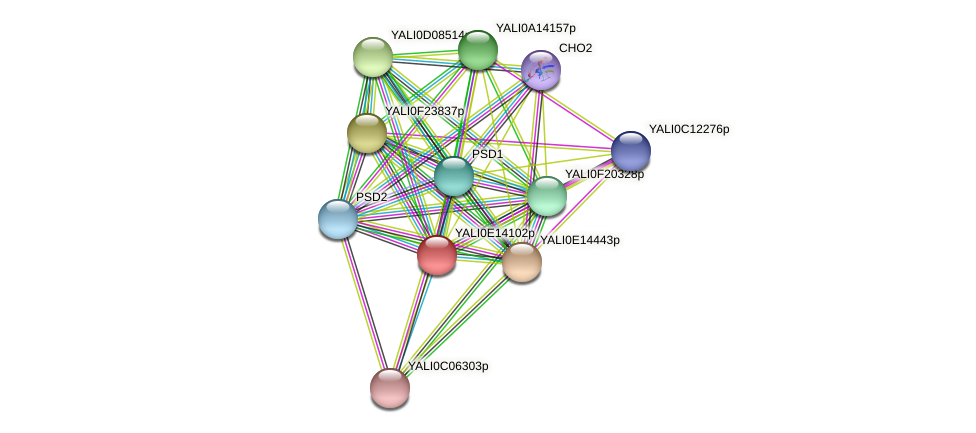 XP_503929.1 protein (Yarrowia lipolytica) - STRING interaction network