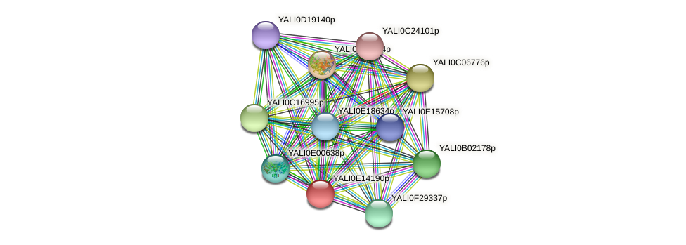 XP_503933.2 protein (Yarrowia lipolytica) - STRING interaction network