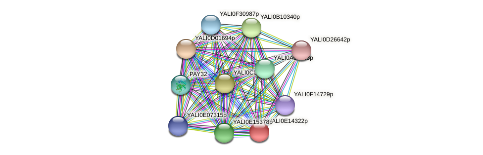 XP_503937.1 protein (Yarrowia lipolytica) - STRING interaction network