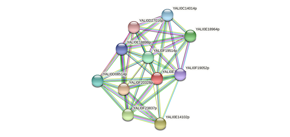 XP_503942.1 protein (Yarrowia lipolytica) - STRING interaction network