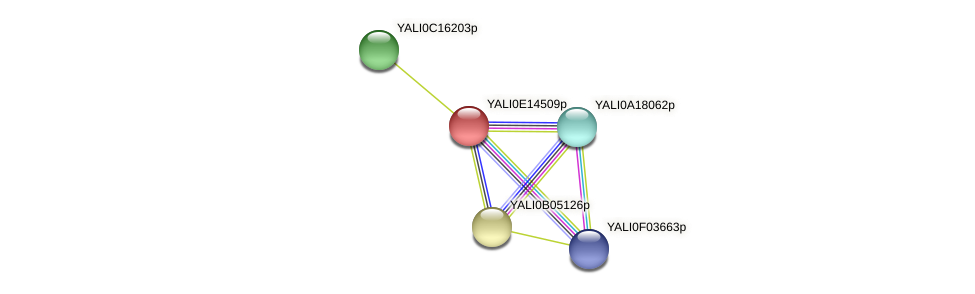 XP_503945.1 protein (Yarrowia lipolytica) - STRING interaction network