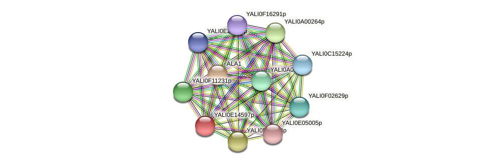 XP_503947.1 protein (Yarrowia lipolytica) - STRING interaction network