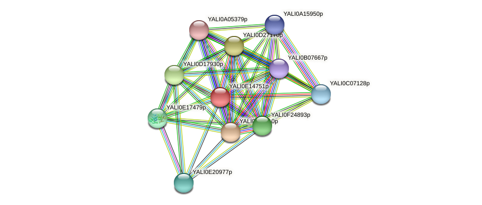 XP_503954.1 protein (Yarrowia lipolytica) - STRING interaction network
