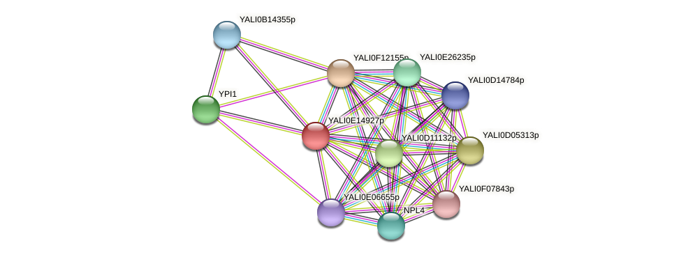 XP_503959.1 protein (Yarrowia lipolytica) - STRING interaction network