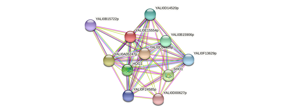 XP_503986.1 protein (Yarrowia lipolytica) - STRING interaction network