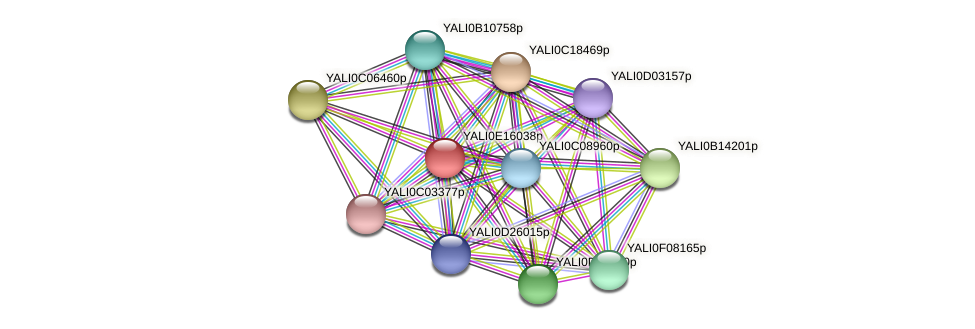 XP_504005.1 protein (Yarrowia lipolytica) - STRING interaction network
