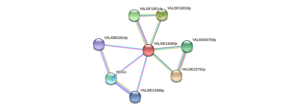 XP_504006.1 protein (Yarrowia lipolytica) - STRING interaction network