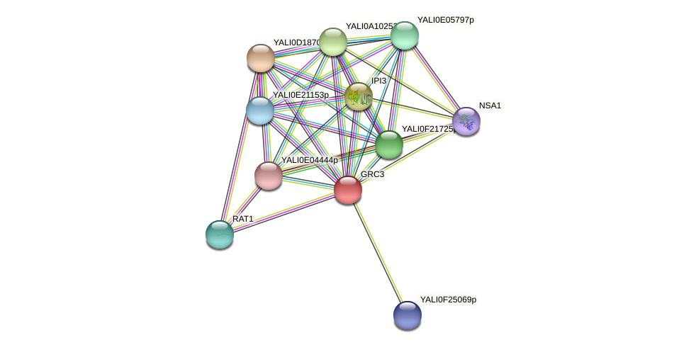 GRC3 protein (Yarrowia lipolytica) - STRING interaction network