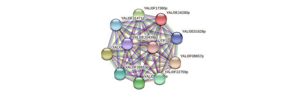 XP_504014.1 protein (Yarrowia lipolytica) - STRING interaction network