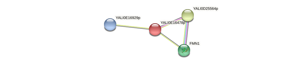 XP_504023.1 protein (Yarrowia lipolytica) - STRING interaction network
