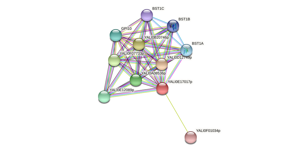 XP_504048.1 protein (Yarrowia lipolytica) - STRING interaction network