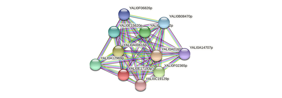 XP_504054.1 protein (Yarrowia lipolytica) - STRING interaction network
