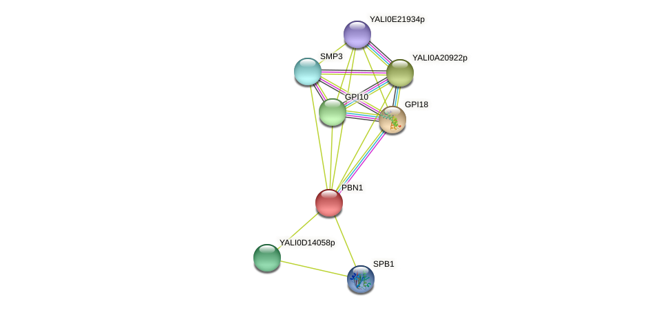 PBN1 protein (Yarrowia lipolytica) - STRING interaction network
