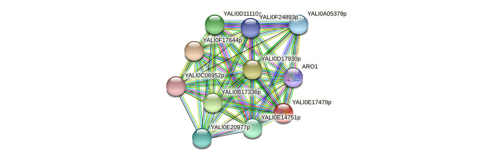 XP_504065.1 protein (Yarrowia lipolytica) - STRING interaction network