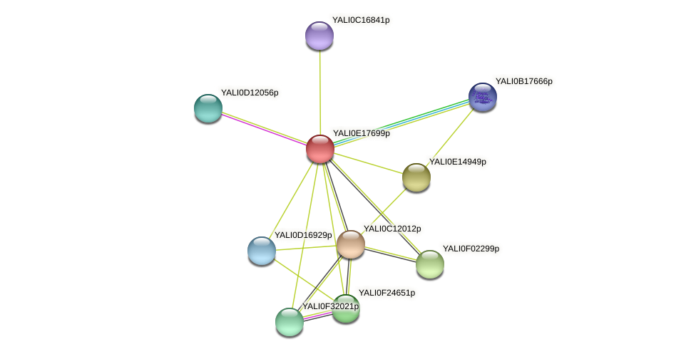 XP_504073.1 protein (Yarrowia lipolytica) - STRING interaction network