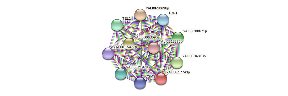 XP_504075.1 protein (Yarrowia lipolytica) - STRING interaction network