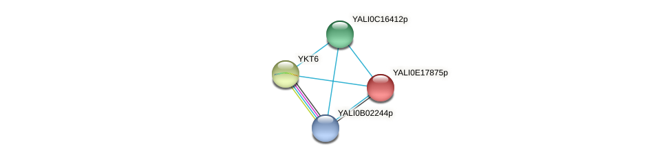 XP_504081.1 protein (Yarrowia lipolytica) - STRING interaction network