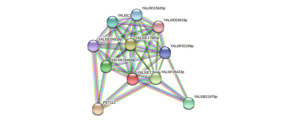 XP_504083.1 protein (Yarrowia lipolytica) - STRING interaction network