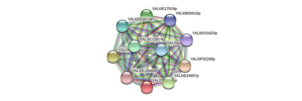 XP_504086.1 protein (Yarrowia lipolytica) - STRING interaction network