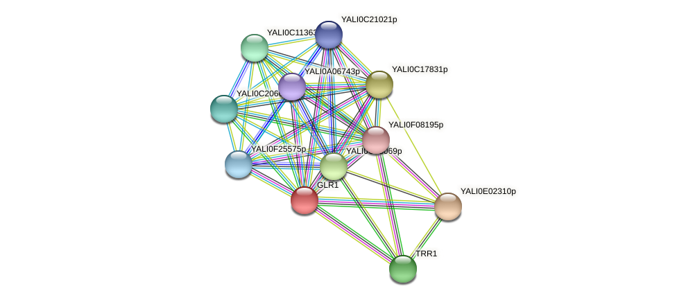 GLR1 protein (Yarrowia lipolytica) - STRING interaction network