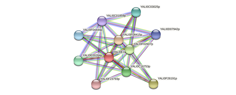 XP_504096.1 protein (Yarrowia lipolytica) - STRING interaction network