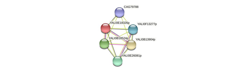 XP_504100.1 protein (Yarrowia lipolytica) - STRING interaction network