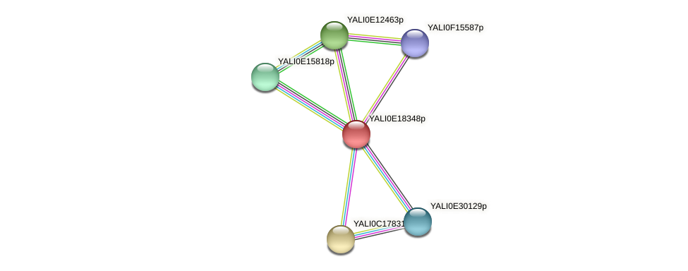 XP_504101.1 protein (Yarrowia lipolytica) - STRING interaction network