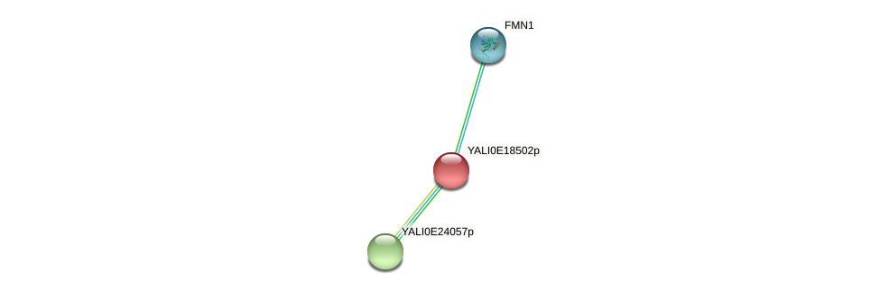 XP_504106.1 protein (Yarrowia lipolytica) - STRING interaction network