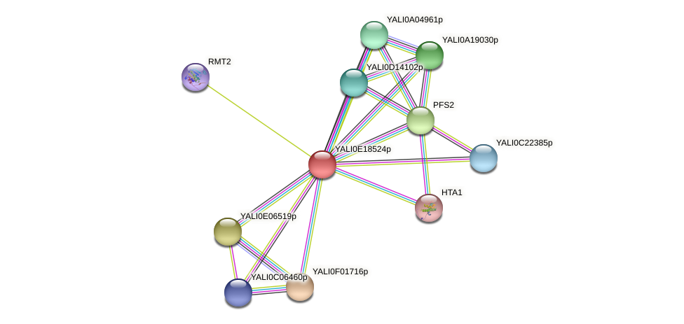 XP_504107.1 protein (Yarrowia lipolytica) - STRING interaction network