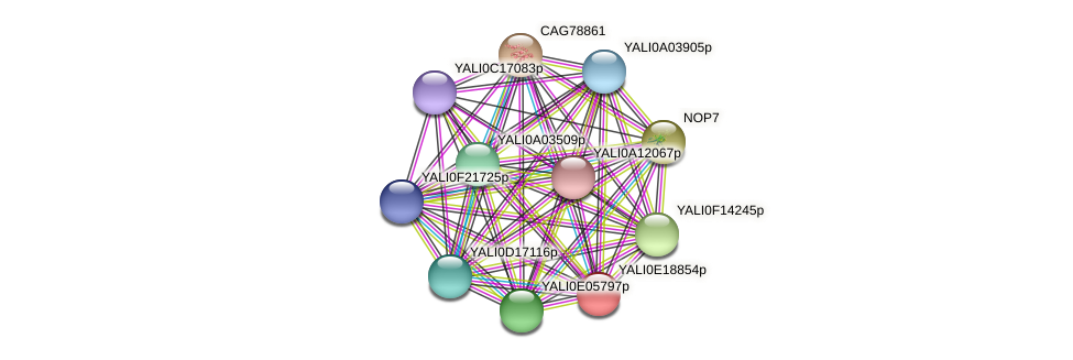 XP_504122.1 protein (Yarrowia lipolytica) - STRING interaction network