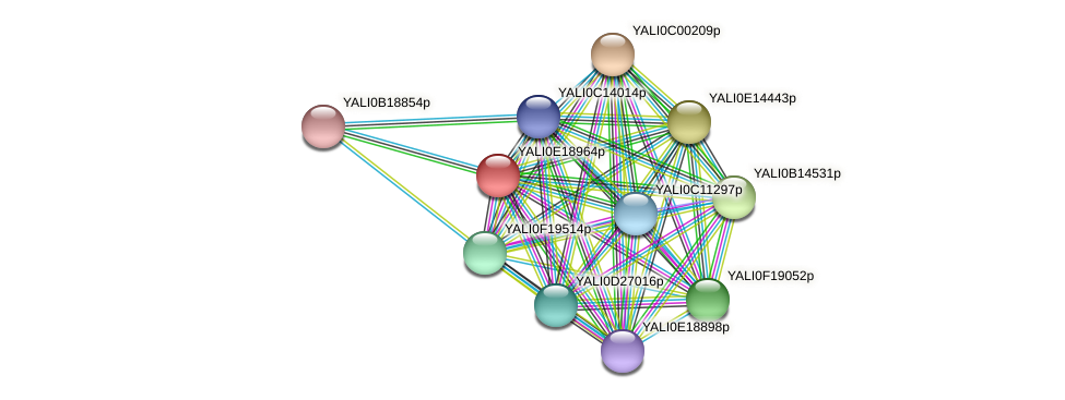 XP_504127.1 protein (Yarrowia lipolytica) - STRING interaction network