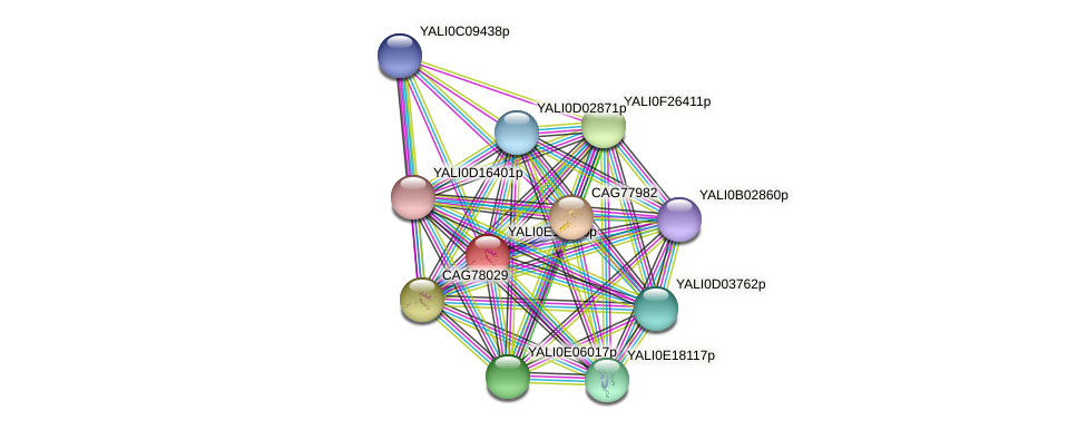 XP_504128.2 protein (Yarrowia lipolytica) - STRING interaction network