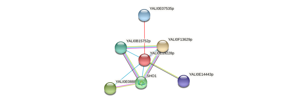 XP_504137.1 protein (Yarrowia lipolytica) - STRING interaction network