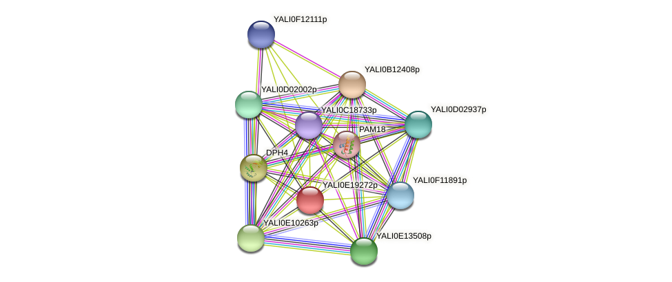 XP_504139.1 protein (Yarrowia lipolytica) - STRING interaction network