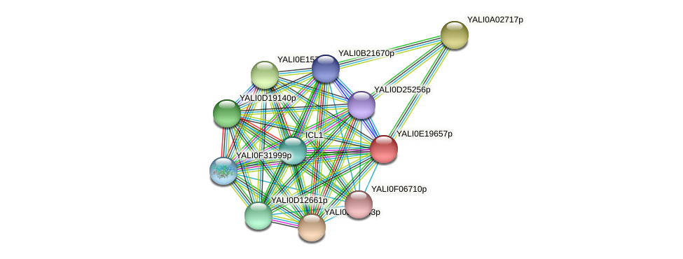 XP_504156.1 protein (Yarrowia lipolytica) - STRING interaction network
