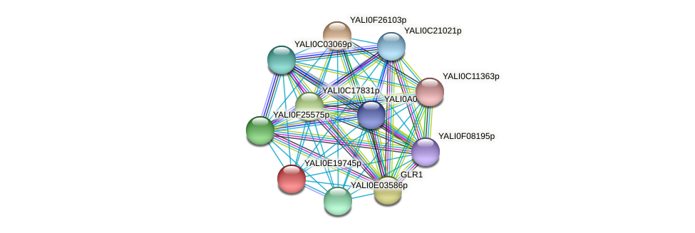 XP_504160.2 protein (Yarrowia lipolytica) - STRING interaction network
