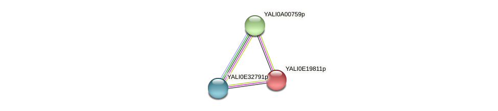 XP_504163.1 protein (Yarrowia lipolytica) - STRING interaction network