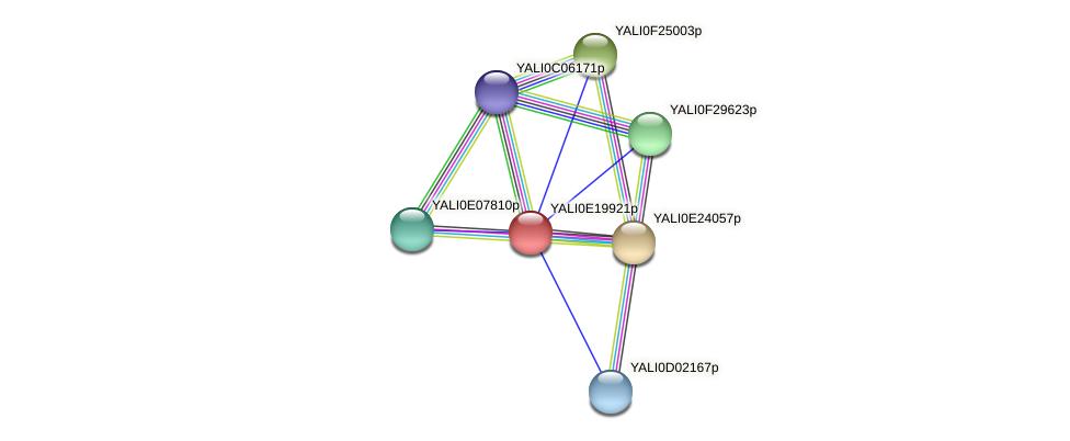 XP_504165.1 protein (Yarrowia lipolytica) - STRING interaction network