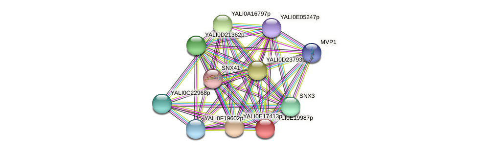 XP_504168.1 protein (Yarrowia lipolytica) - STRING interaction network