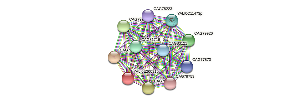 XP_504170.2 protein (Yarrowia lipolytica) - STRING interaction network