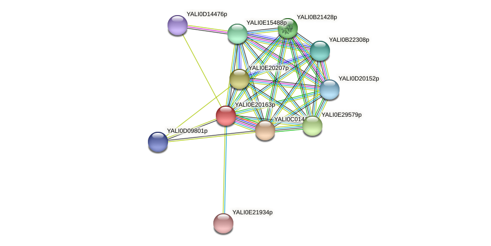 XP_504176.1 protein (Yarrowia lipolytica) - STRING interaction network