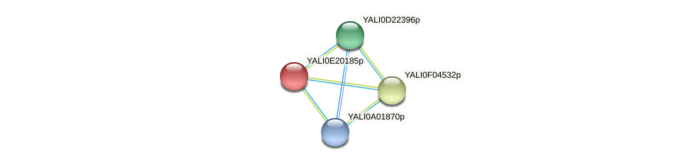 XP_504177.1 protein (Yarrowia lipolytica) - STRING interaction network